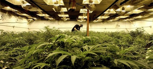 Council panel OKs zoning for big pot-growing operations