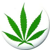 cannabis school in Seattle