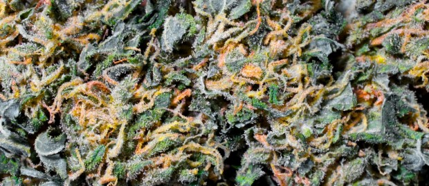 how to get a marijuana dispensary license in texas