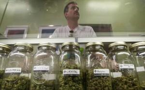 Cannabis courses