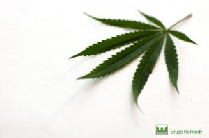 Cannabis Business Courses