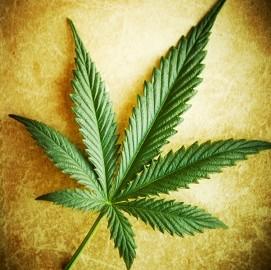 Cannabis Courses Online