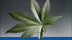 Seminars for cannabis business