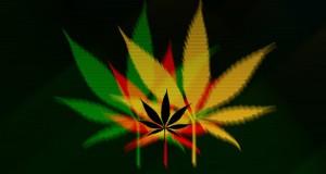 Washington Seminars for Marijuana