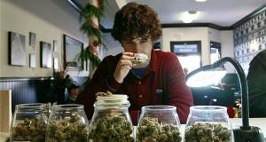 Accounting for marijuana business