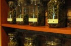 Dispensary business law group