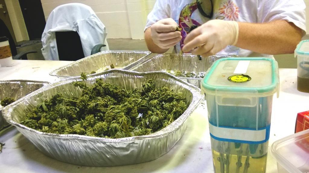 California cannabis university