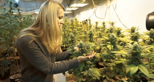 Courses for cannabis business