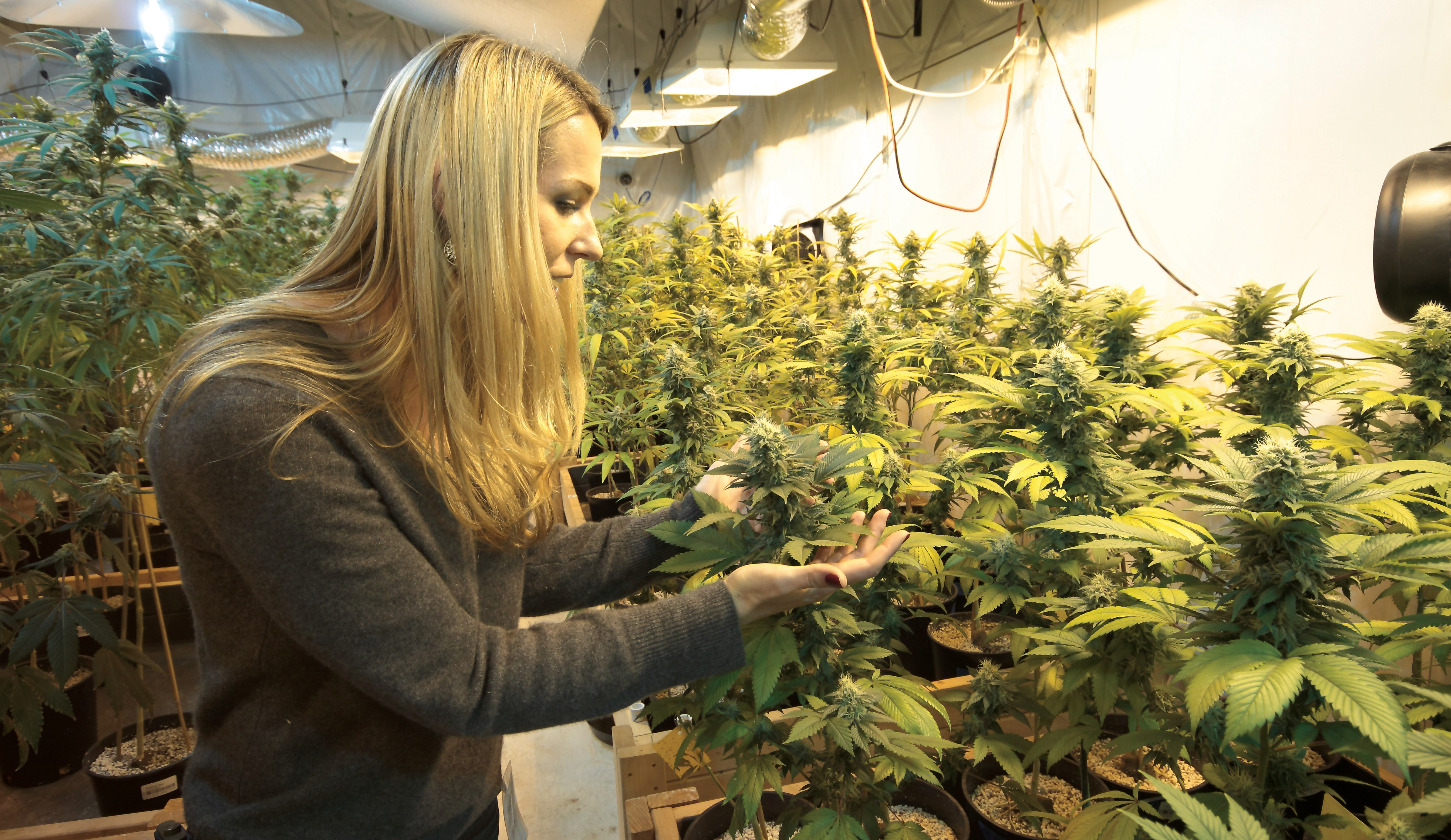 Courses for cannabis business1