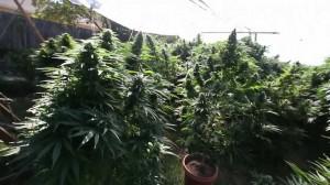 Marijuana university courses online1
